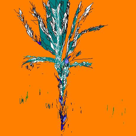 palmier orange